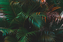 Palm Leaves, Vivid