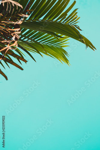 palm leaves with sky in holiday Wall mural
