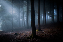 Nocturnal Forest In Moonlight