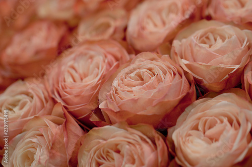 big beautiful festive bouquet of pink tender roses © guppys