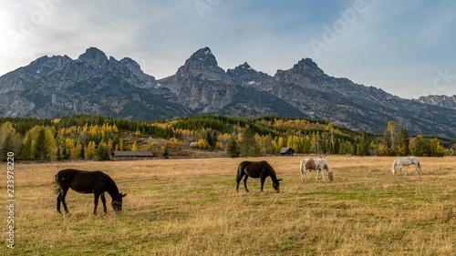 Photo sur Toile Elephant Four horses grazing in autumn with the Tetons mountain range