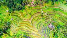 Ubud Rice Terraces. Bali, Indonesia.