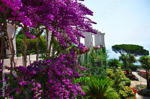 Fototapeta Villa Rufolo ogród obraz