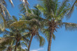 View at palm trees on the island of Mussulo, Luanda, Angola