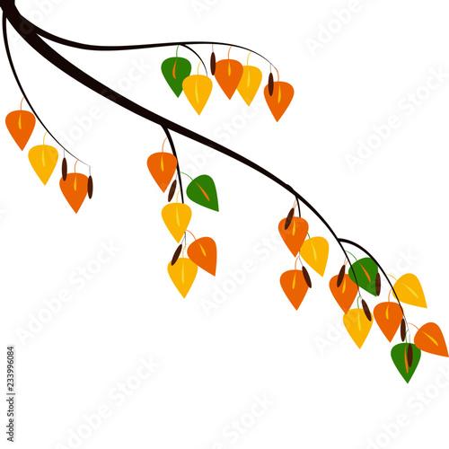 Fényképezés  Autumn Birch branch