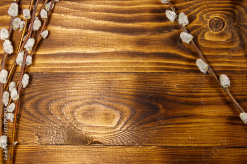 Fototapety, obrazy: Pussy willow twigs on wooden background. Top view, copy space