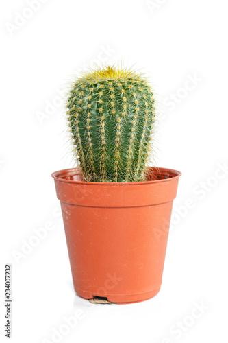 cactus in orange pot on white background.