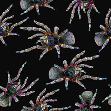Embroidery Spider Seamless Pattern. Halloween Background. Horror Art Clothes Template And T-shirt Design. Classical Dark Gothic Embroidery, Tarantula