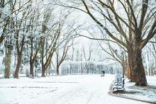 Snowed City Park. Winter Time....