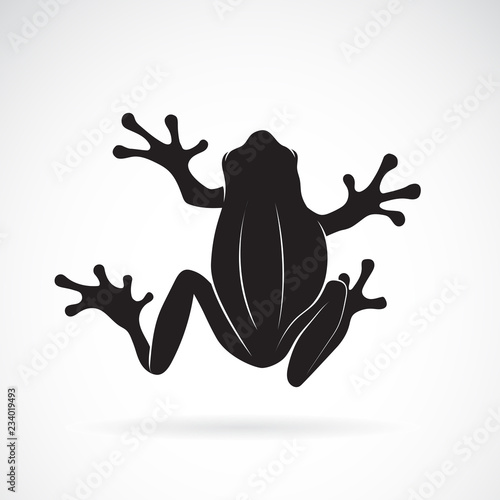 Photographie Vector of frog design on white background