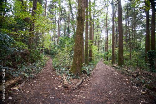 Obraz na plátně 森の分かれ道