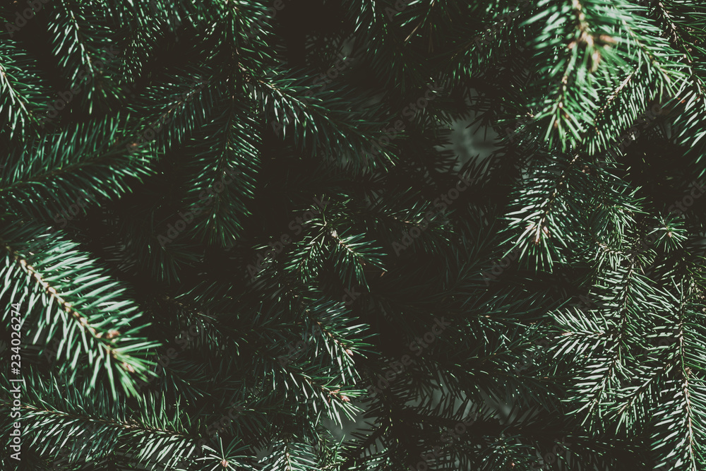 Fototapety, obrazy: Christmas fir tree background with copy space. Fir tree branches texture.