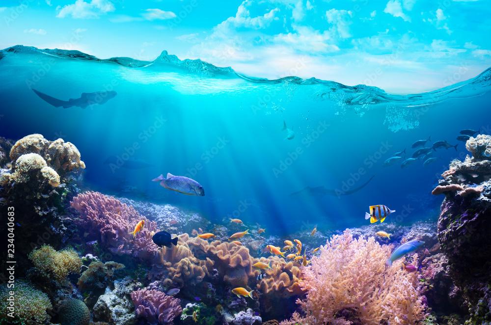 Fototapeta Underwater view of the coral reef.