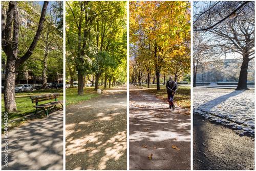 Fotografie, Obraz  Four seasons concept