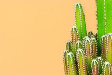 Green Cactus Minimal Stillife Style Against Pastel Orange Background.