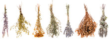 Set Of Dried Wildflowers Isola...
