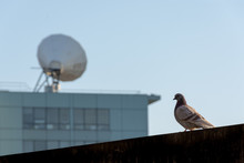 A Pigeon And A Satellite Dish : Old And Modern Means Of Communication