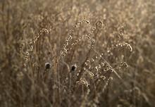 Dry Autumn Grass