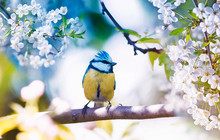 Cute Little Bird Tit Sitting O...