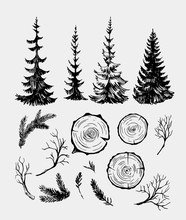 Set Of Forest Elements, Fir Trees, Branches. Hand Drawn Sketch Converted To Vector