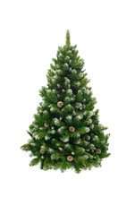 Green Pine, Christmas Tree Isolated On White Closeup