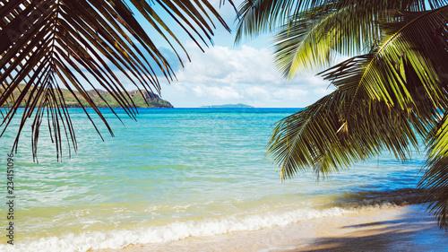Foto op Aluminium Oceanië Palm and tropical beach of Praslin island, Seychelles