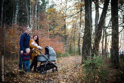 im Wald spazieren gehen Fototapeta