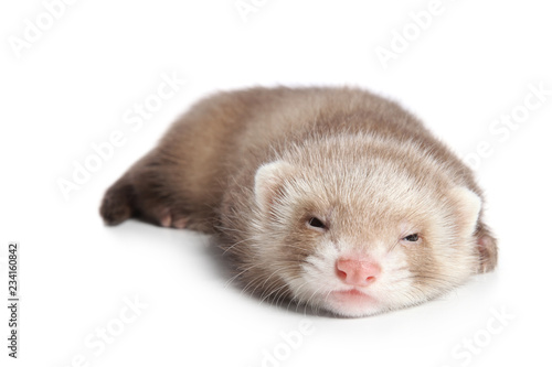 Fotografia, Obraz Ferret sleeps sweetly on white background