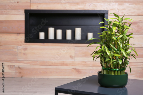 Photographie  Pot with green bamboo on table in room. Space for text