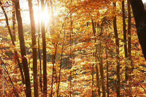 Foto op Plexiglas Landschappen Picturesque view of beautiful forest on sunny autumn day