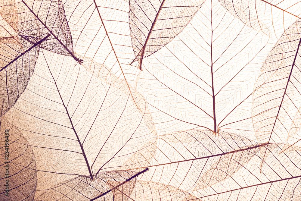 Fototapeta Top view of beautiful decorative skeleton leaves