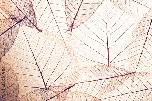 Papel de parede Top view of beautiful decorative skeleton leaves