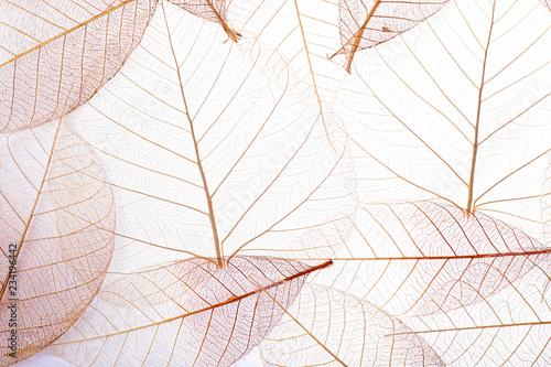 Fototapeta Top view of beautiful decorative skeleton leaves obraz na płótnie