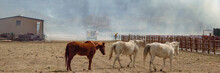 Saving Horses From A Wildfire