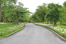Road In The Summer Garden With Flower And Tree Around There. Peaceful Green Park And Way For Exercise And Relax.