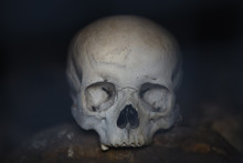 The Human Skull In An Ancient Burial In The Mountains Of Ingushetia.