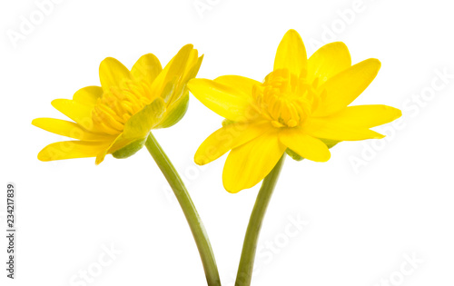 Papiers peints Narcisse Yellow spring flower isolated