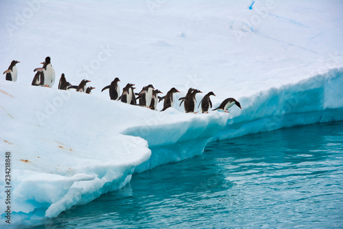 In de dag Pinguin Group of penguins running and jumping from the iceberg in Antarctica