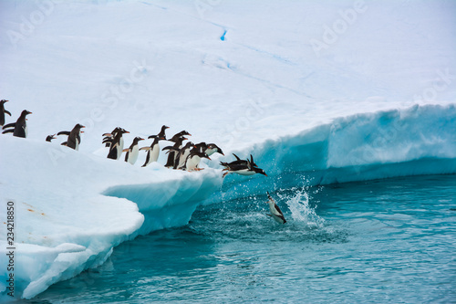 Spoed Fotobehang Pinguin Penguins One After Another Funny Jump Into The Blue Water From A Snow-white Iceberg, Antarctica