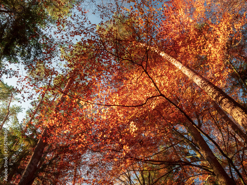 Scenic games between sun and red gold autumn colors in Bavaria © Wolfgang Hauke