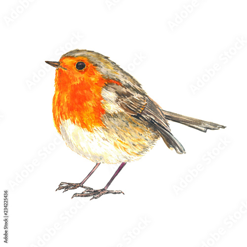 Canvas Print European robin (Erithacus rubecula,  robin redbreast)  standing isolated waterco