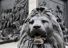 Statue Of A Lion, Trafalgar Square, London, United Kingdom