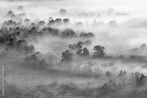 Fototapeta Mgła w lesie, Włochy