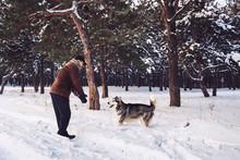 Malamute Man And Dog Playing I...