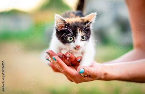 Foto  Little furry kitten on a girl's hands, outdoors