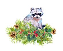 Cute Raccoon Animal In Snowflakes. Pine Tree Twigs, Christmas Mistletoe. Watercolor