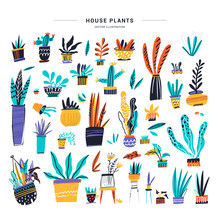 House Plants Color Hand Drawn ...