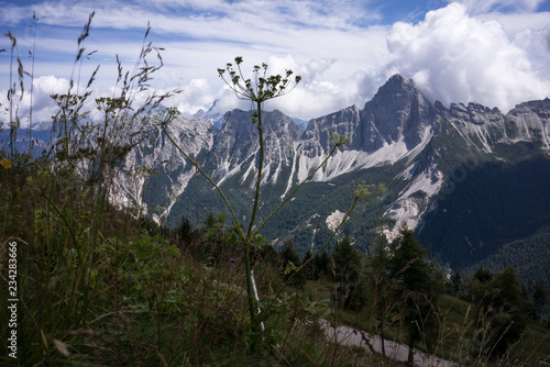 Alps and herbs in Tirol