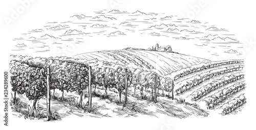 Fotografia vine plantation hills, trees, clouds on the horizon vector illustration