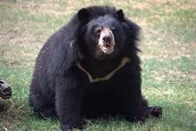Bear Enjoying In The Zoo